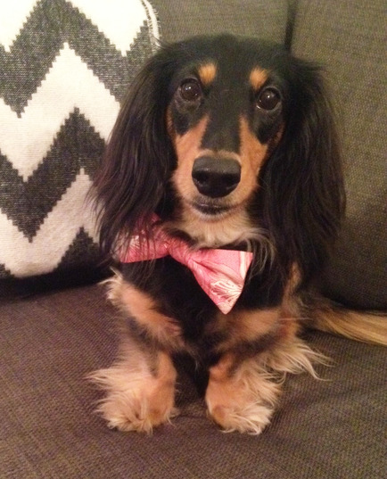 Ethel loves bow ties